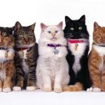 Guide d'achat adopter chat