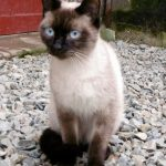 Avis chaton paris adoption