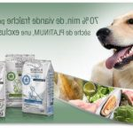 Guide d'achat dog chow puppy