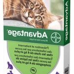 Guide d'achat vermifuge chat pipette prix