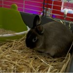 Test transport lapin