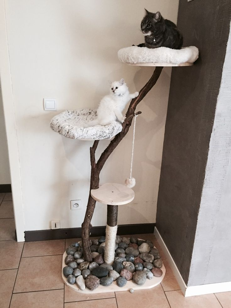 Guide D'achat Arbre A Chat Grand Chat