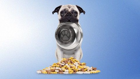 Guide D'achat Croquettes Metabolic Chien