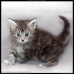 Avis adoption chaton paris