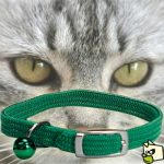 Guide d'achat collier pour chatons