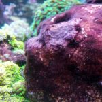Test algues aquarium