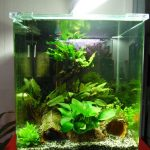 Test aquarium carre