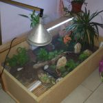 Comparatif lampe uv tortue