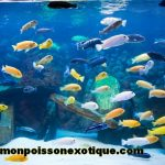 Comparatif magasin de poisson rouge