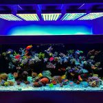 Avis eclairage aquarium led