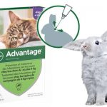Guide d'achat traitement anti puce chaton
