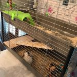 Avis double cage lapin