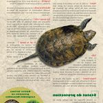 Test tortue hermann a vendre