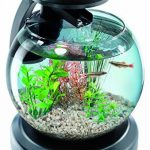 Comparatif sable noir aquarium