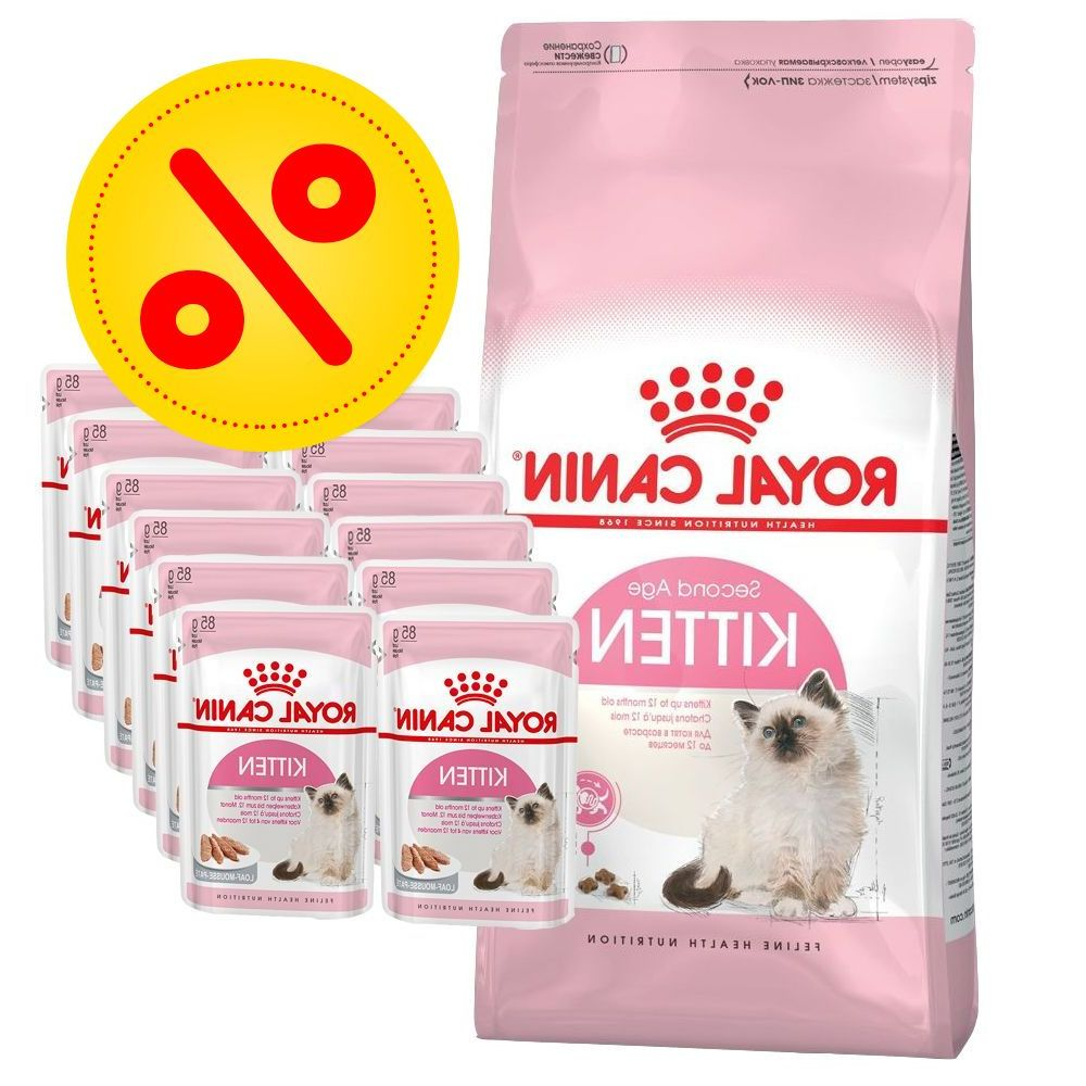 Test Croquette Royal Canin Maine Coon