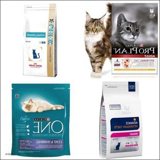 Guide D'achat Croquette Royal Canin Chaton