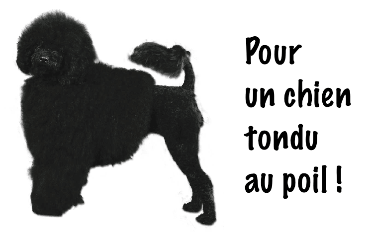 guide dachat oster tondeuse