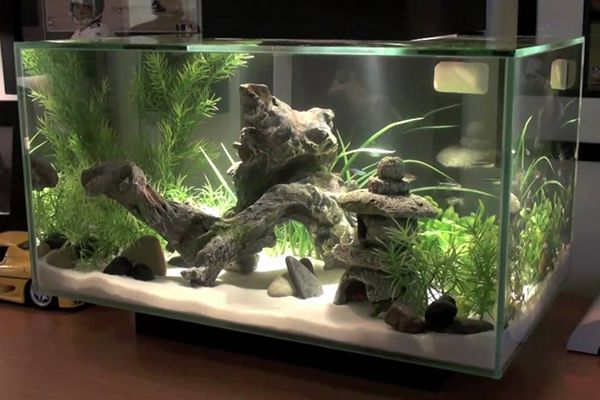 test deco aquarium